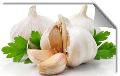 alii sativi bulbus kandungan bawang putih dalam foredi gel